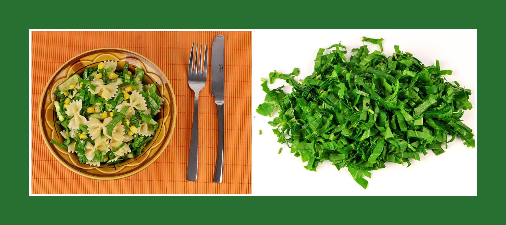 Sauerampfer für erfrischenden sommerlichen Nudelsalat