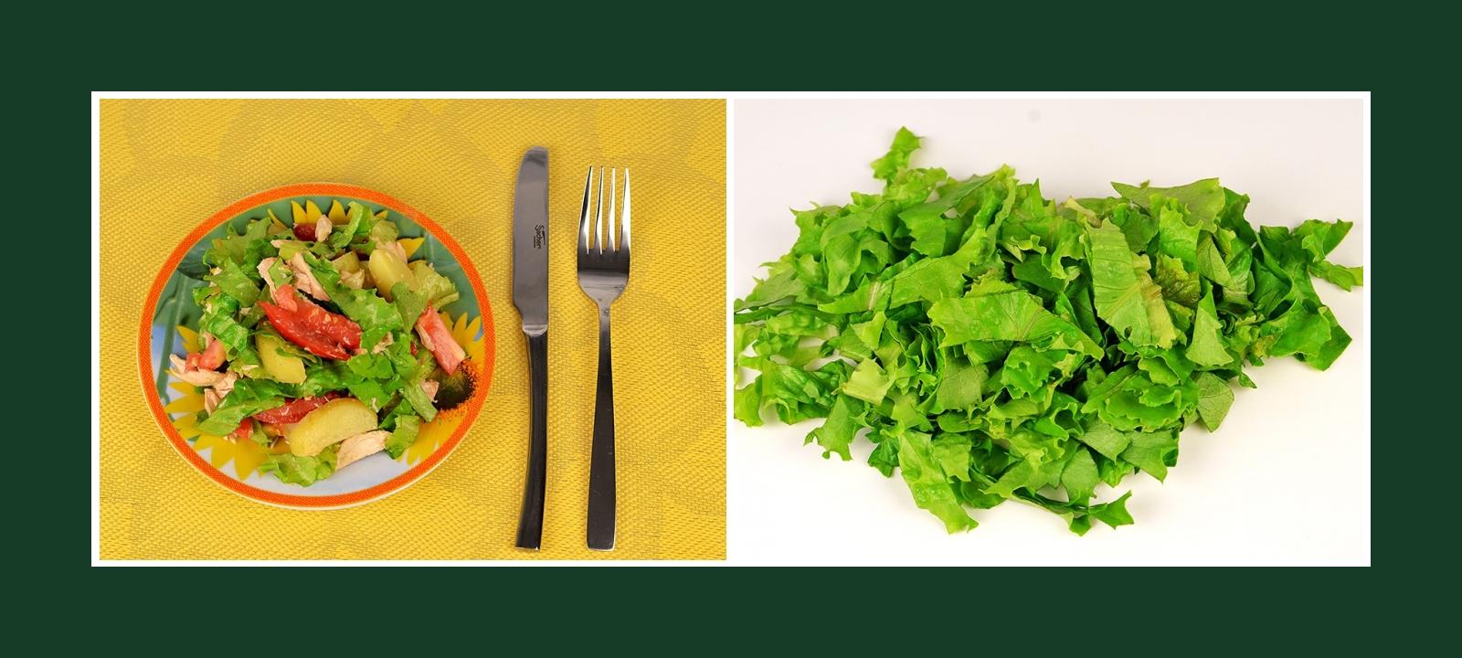 Grüne Salatblätter für Kartoffelsalat Fleischsalat