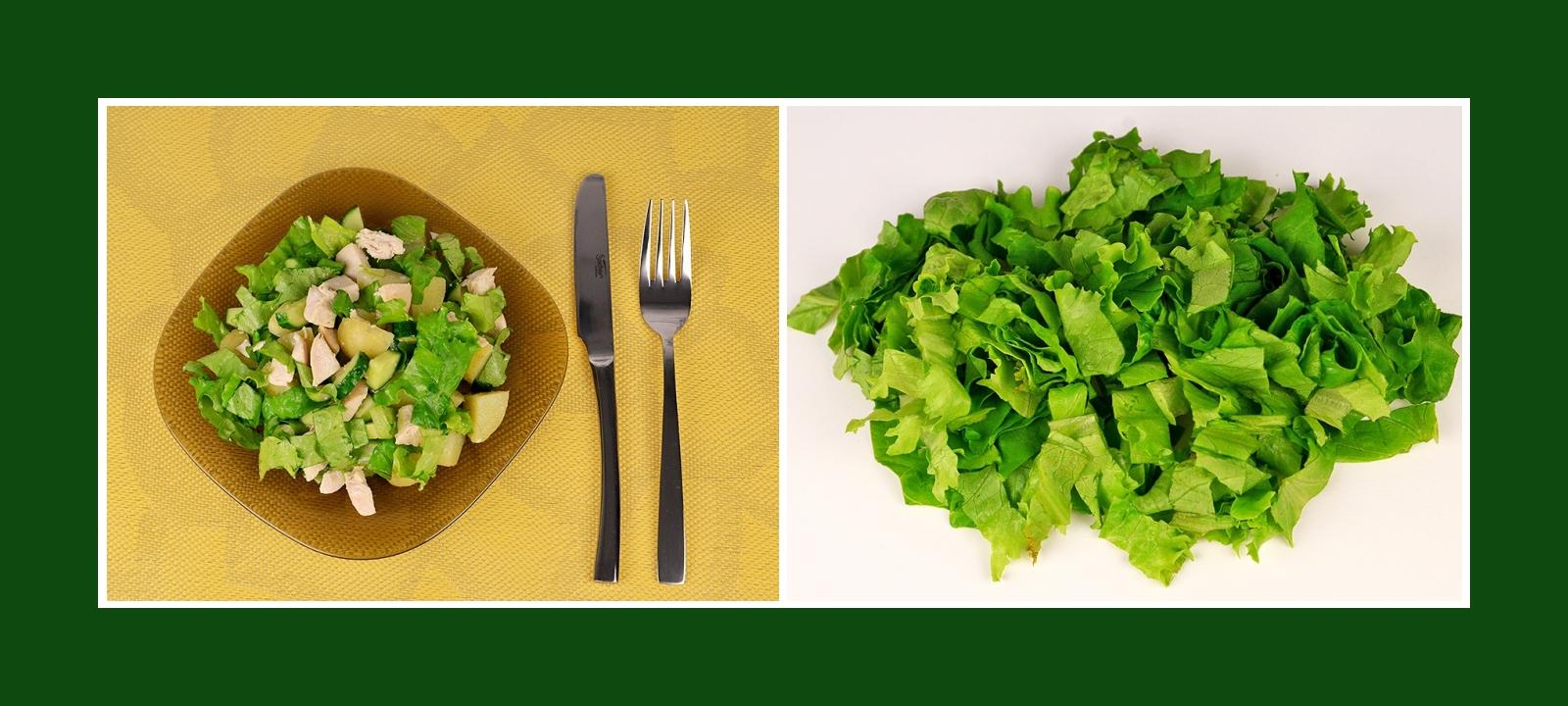 Salat für grünen Frühlingssalat