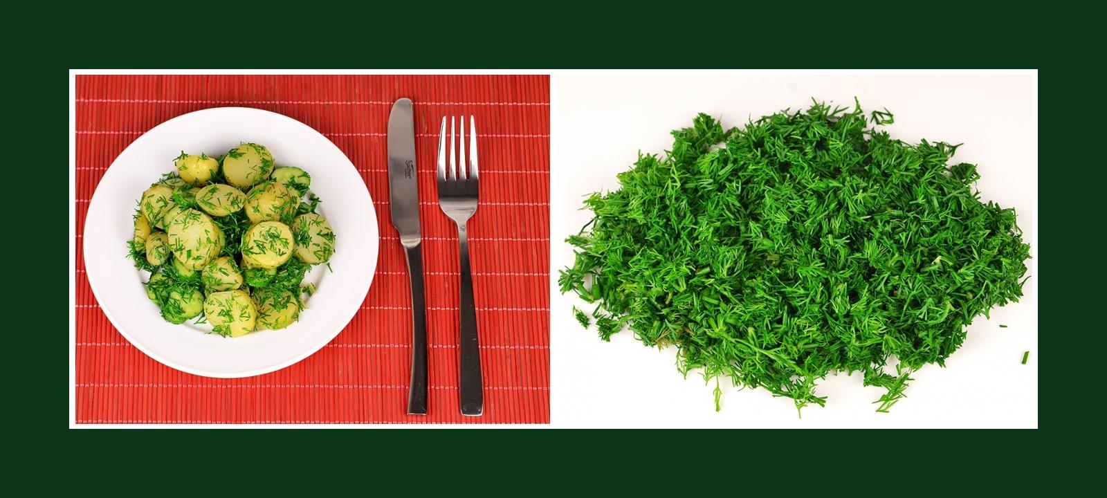 Dill für Kartoffelsalat mit Gurken